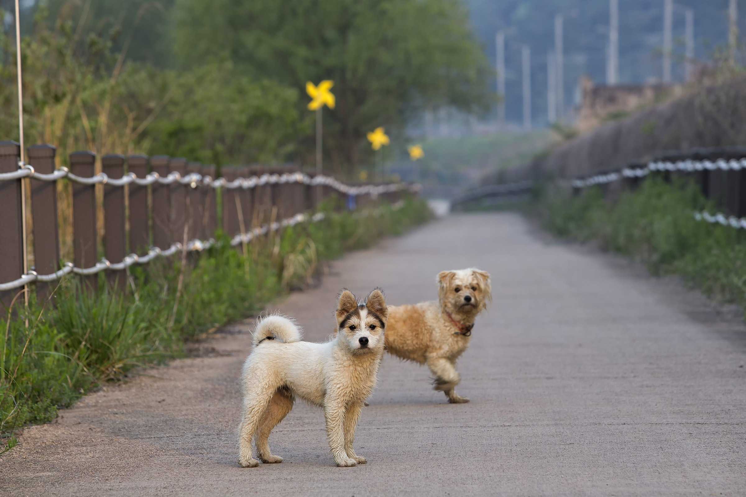 animals-canine-couple-416204